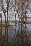 Frühling, Reflexion von Bäumen Lizenzfreie Stockbilder