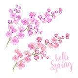 Frühling Sakura Twig Lizenzfreie Stockbilder