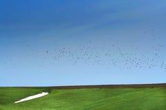 Frühling. Schnee, grünes Gras und Vogel Lizenzfreie Stockfotos