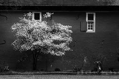Frühling in Schwarzweiss Lizenzfreies Stockfoto