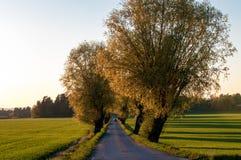 Frühling in Schweden lizenzfreies stockbild