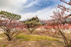 Frühling in Seoul Südkorea Stockbilder