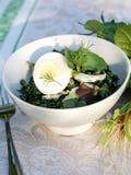 Frühling-Sommer Unkraut-Krautsalat für ein Picknick Stockbilder