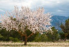 Frühling in Spanien lizenzfreie stockfotos