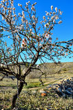Frühling in Spanien Lizenzfreie Stockfotografie