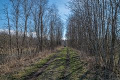 Frühling, Straße im Wald stockfotografie