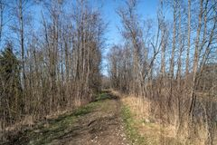 Frühling, Straße im Wald lizenzfreie stockfotografie