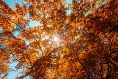 Frühling Sun, der durch Überdachung des hohe Baum-Bambus-Holzes scheint SU Lizenzfreies Stockfoto