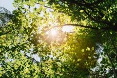 Frühling Sun, der durch Überdachung von hohen Bäumen scheint Sonnenlicht im tropischen Wald, Lizenzfreie Stockfotografie