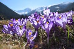 Frühling in Tatra-Bergen Stockfotos