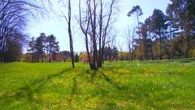 Frühling timelapse im Park stock footage