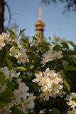 Frühling und blühende christliche Kirche des Apfelbaums Stockfoto