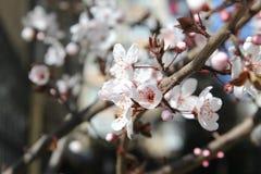 Frühling und Blumen Stockfoto
