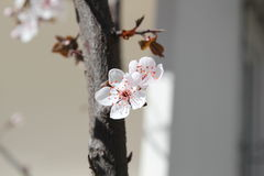 Frühling und Blumen Stockfotografie