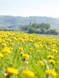 Frühling und die Blumen Stockfoto