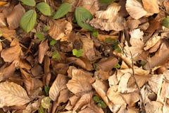 Frühling und Herbst Horizontale Fahnen für das Web Lizenzfreies Stockfoto