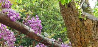 Frühling und Holzbiene stockfotos