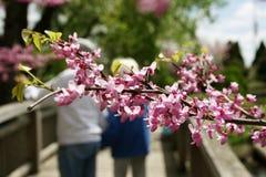 Frühling und Liebeshintergrund Stockbilder