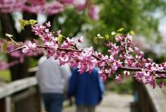 Frühling und Liebeshintergrund Lizenzfreie Stockfotos