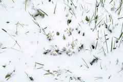 Frühling und Schnee Stockbilder