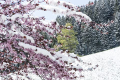 Frühling und Schnee Lizenzfreies Stockfoto