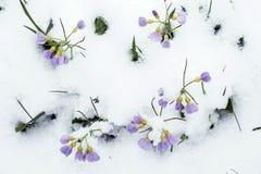 Frühling und Schnee Stockfoto