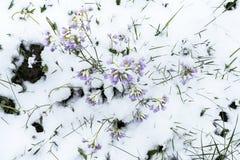 Frühling und Schnee Lizenzfreie Stockbilder