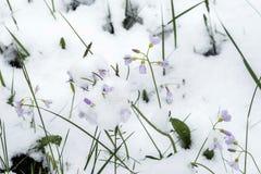 Frühling und Schnee Stockfotos