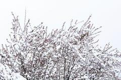 Frühling und Schnee Lizenzfreie Stockfotos