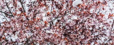 Frühling und Schnee Lizenzfreies Stockbild