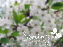 Frühling unscharfer Hintergrund Stockfotos