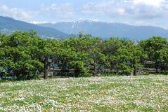 Frühling in Vancouver Stockfoto