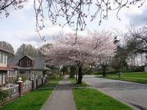 Frühling in Vancouver, Kanada Stockfotos