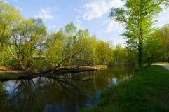 Frühling waterscape Lizenzfreies Stockfoto