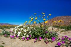 Frühling Wildflower-Blumenstrauß Stockfoto