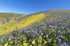 Frühling Wildflower in der Erdbeben-Strecke Lizenzfreies Stockfoto