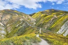 Frühling Wildflower in der Erdbeben-Strecke Lizenzfreies Stockbild