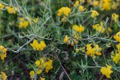 Frühling Wildflowers, die in der Feldnahaufnahme wachsen Lizenzfreie Stockfotos