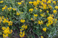 Frühling Wildflowers, die in einer Feldnahaufnahme wachsen Lizenzfreie Stockbilder