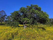 Frühling Wildflowersblühen Lizenzfreie Stockfotos