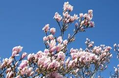 Frühling wird entsprungen Lizenzfreies Stockfoto