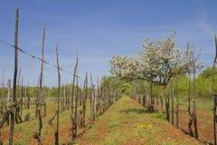 Frühling in zentralem Istria stockfoto