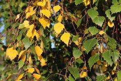Frühling zum Herbst Stockfotos