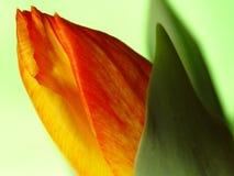 Frühlinges, der heraus 2 kommt Stockbild