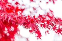 Frühlingsänderungsfarbe Lizenzfreies Stockbild