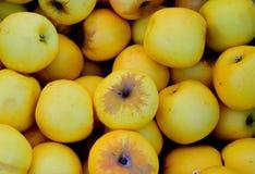 Frühlingsäpfel stockfoto