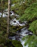Frühlings-Abfluss in Oregon 2 Lizenzfreies Stockfoto