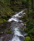 Frühlings-Abfluss in Oregon Stockfotos