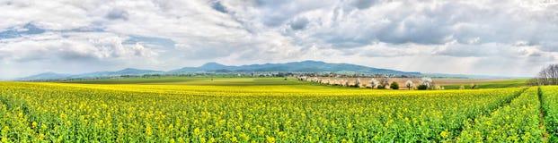 Frühlings-Ackerland Stockbild