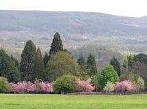 Frühlings-Ansicht Stockbild